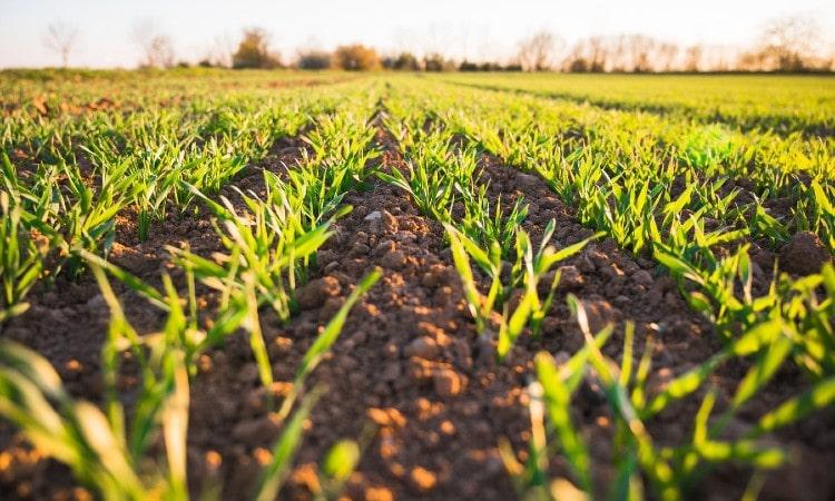 Por qué la agricultura no está sufriendo la crisis